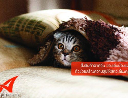 สั่งสินค้าจากจีน ของเล่นน้องแมว ตัวช่วยสร้างความสุขให้สัตว์เลี้ยงคุณ