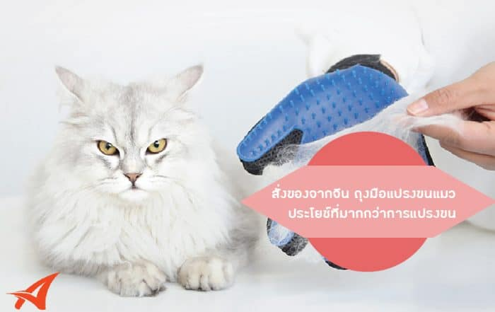 สั่งของจากจีน ถุงมือแปรงขนแมว ประโยชน์ที่มากกว่าการแปรงขน